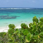 loblolly-beach-anegada-bvi